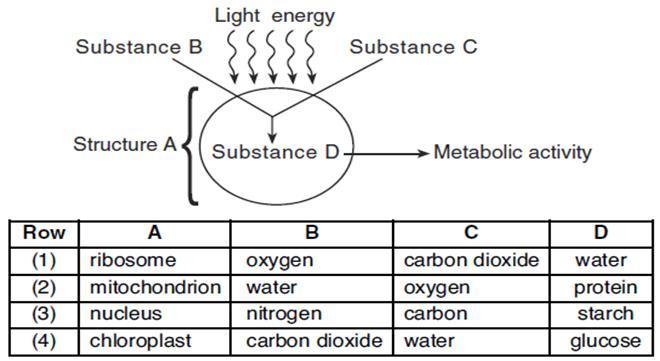 National 5 Unit 1 Homework » MCQ 1_8A Respiration